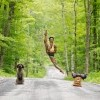 Jacob's Pillow, MA - Michaela DePrince